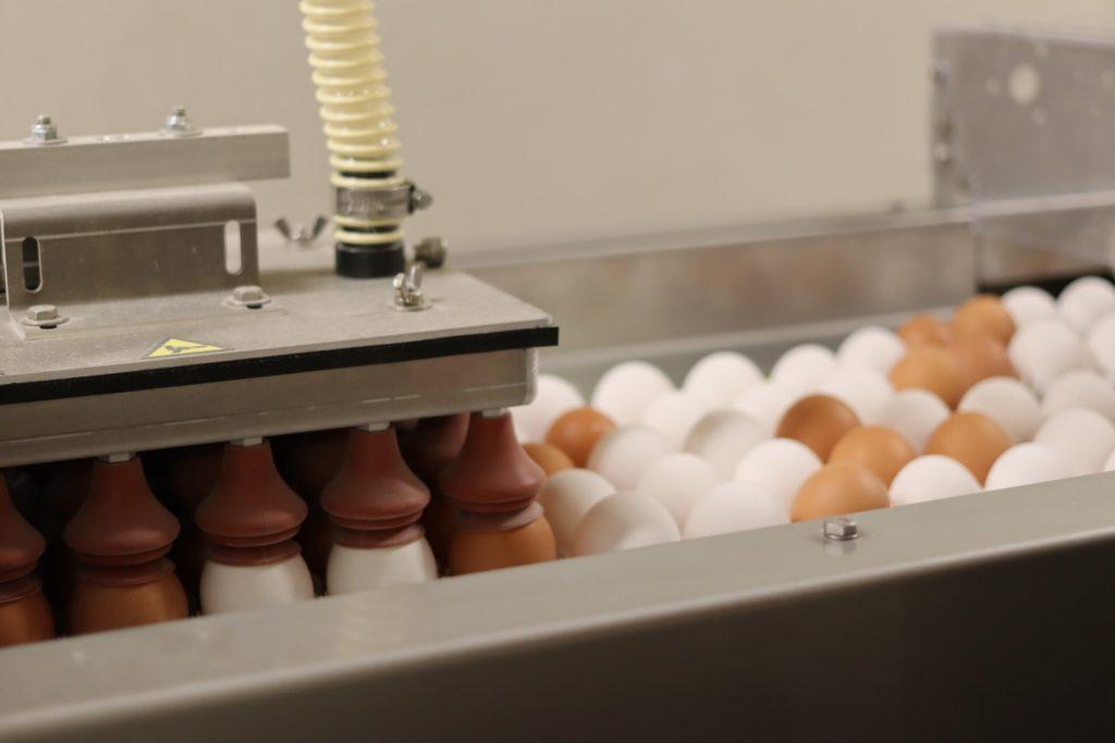 Følg egget